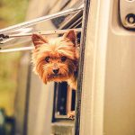 What additional care should I take when taking my Pet on Rental RV?