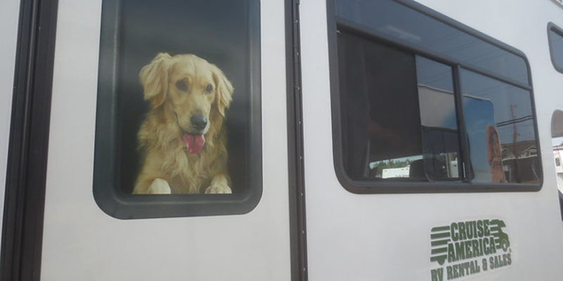 What preparation should to do to travel with my dogs in an RV?