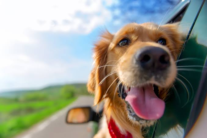 Pets on RV - factors to consider before you rent an RV